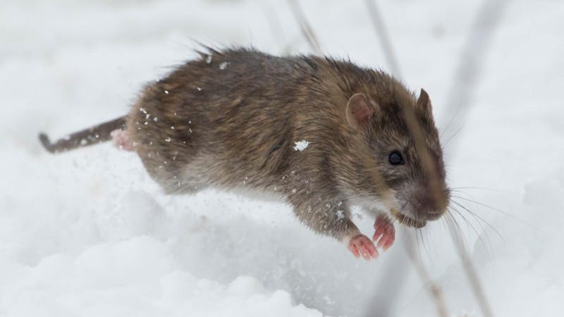 Als het gif van huis is dansen de ratten op tafel nos - Tafel josephine wereldje van het huis ...
