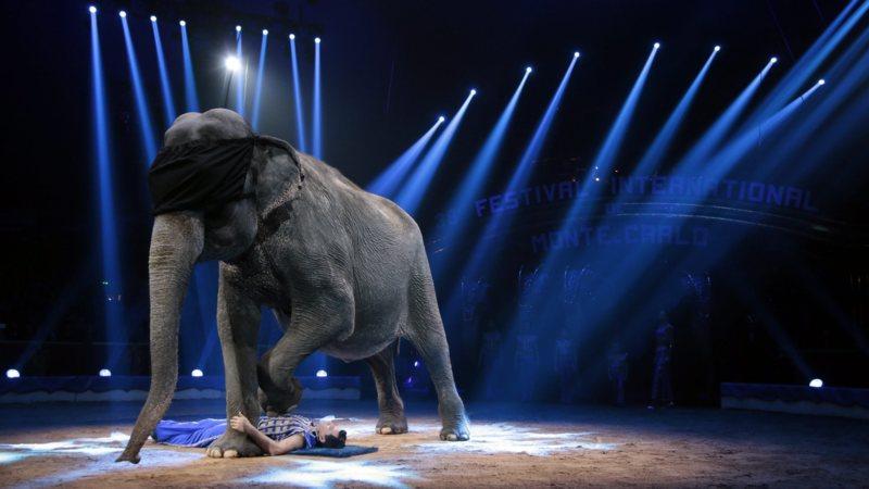 752a35927b5517 Wilde dieren in het circus binnenkort verboden | NOS