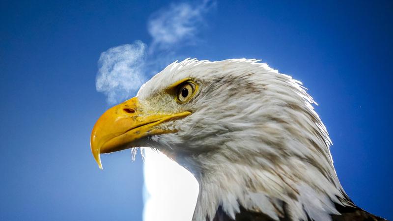 AZ verslaat Go Ahead Eagles in Deventer | NOS