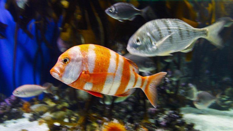 Foutje  tienduizend aquariumvissen dood   NOS