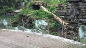Werkstraffen voor jongeren die oude dierentuin Emmen vernielden