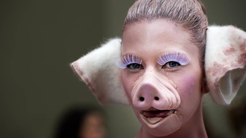 Transplantatie-organen gekweekt in varkens: levensreddend ...