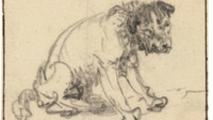 Dog, by Rembrandt