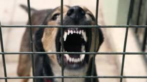 Advies: spuitje voor gevaarlijke, bijtende honden