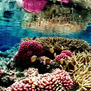 Zo kunnen we het koraal op Curaçao weer herstellen