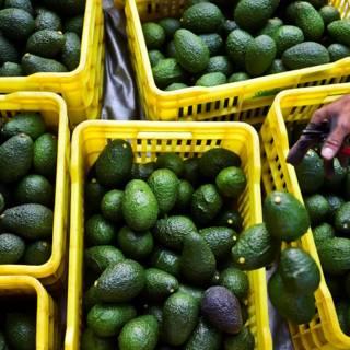 Bekijk details van 'Boeren in ontwikkelingslanden krijgen minder van Nederlandse supermarkten'