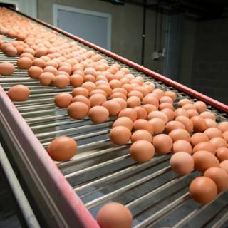 Te veel fipronil in Surinaamse eiersalade, maar niet gevaarlijk