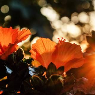 Politie VS ziet hibiscusplant aan voor marihuana en houdt echtpaar aan