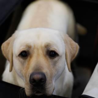 Universiteit Utrecht opent kenniscentrum dierenmishandeling