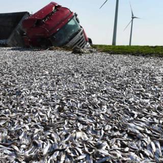 Vrachtwagen verliest 20 ton vis bij ongeluk