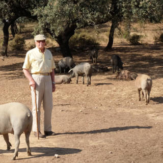 Bekijk details van Schimmel in eikenboom bedreigt beroemde Spaanse biggetjes (en hun ham)