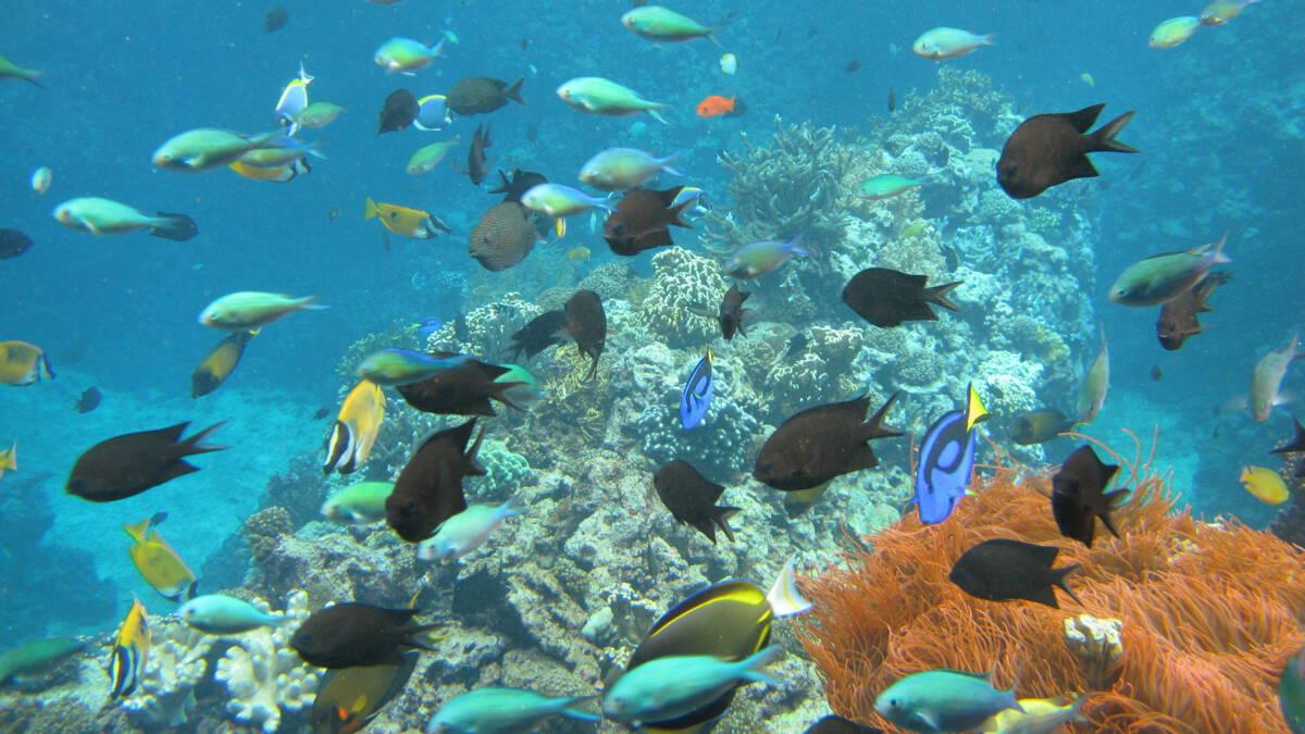 Burgers' Zoo doet koraal cadeau aan Engelse aquaria