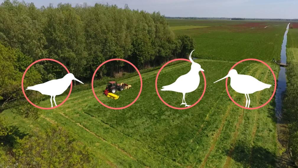 Hoe deze melkveehouders de weidevogels op hun land redden