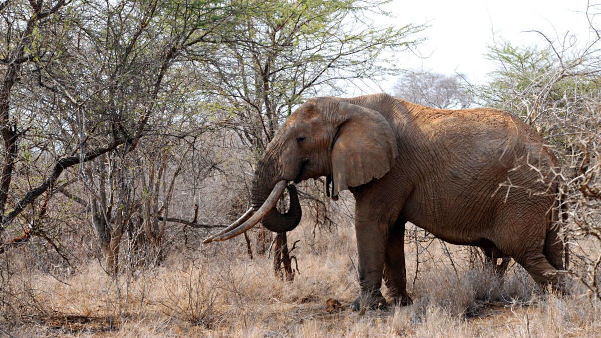 Namibië veilt duizend dieren wegens droogte: 'Zo werd witte neushoorn ook gered'