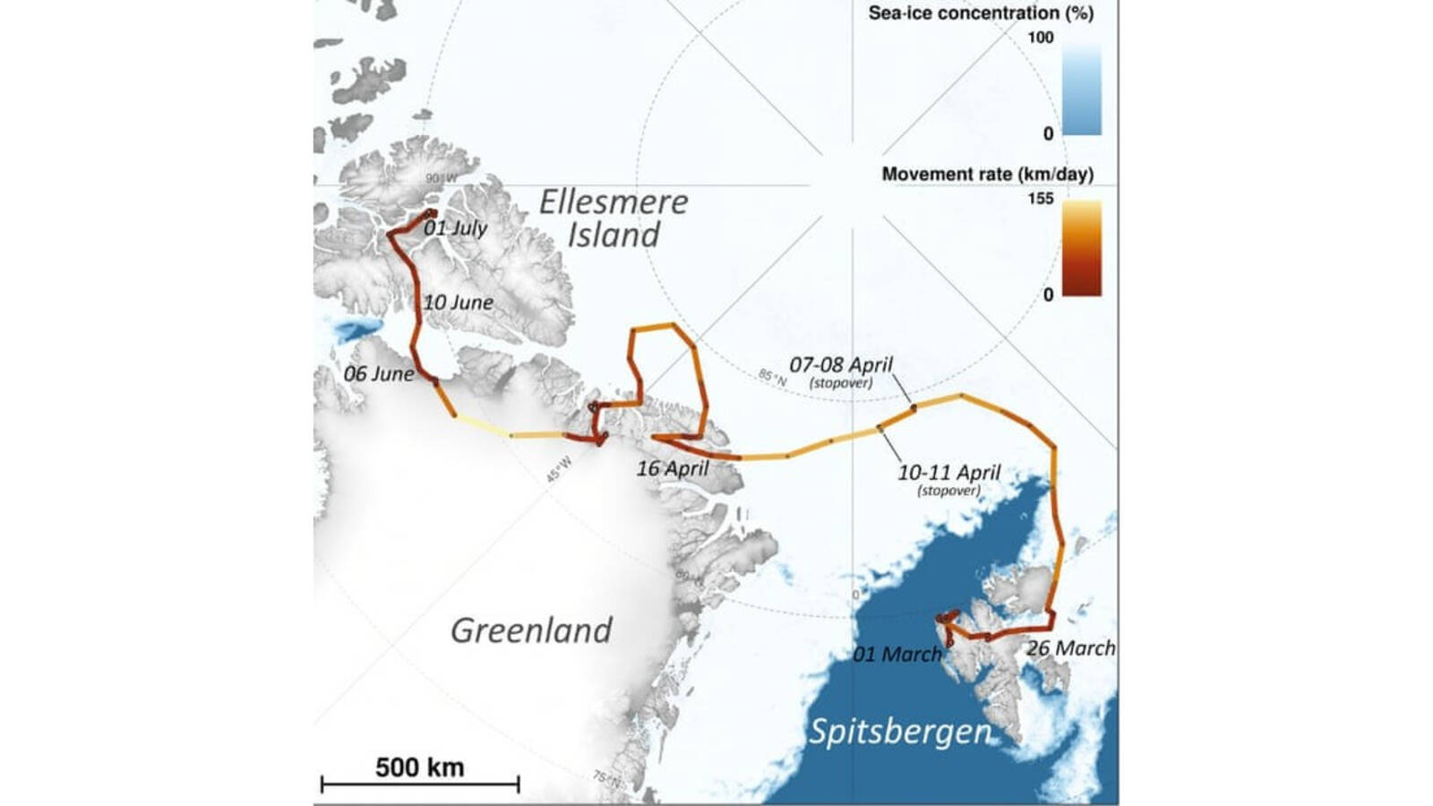 The Arctic fox's long journey, from Polar Research