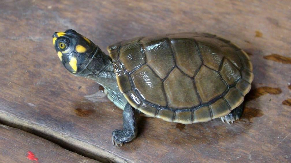 Bekijk details van KLM moet bijna half miljoen betalen voor noodopvang schildpadden