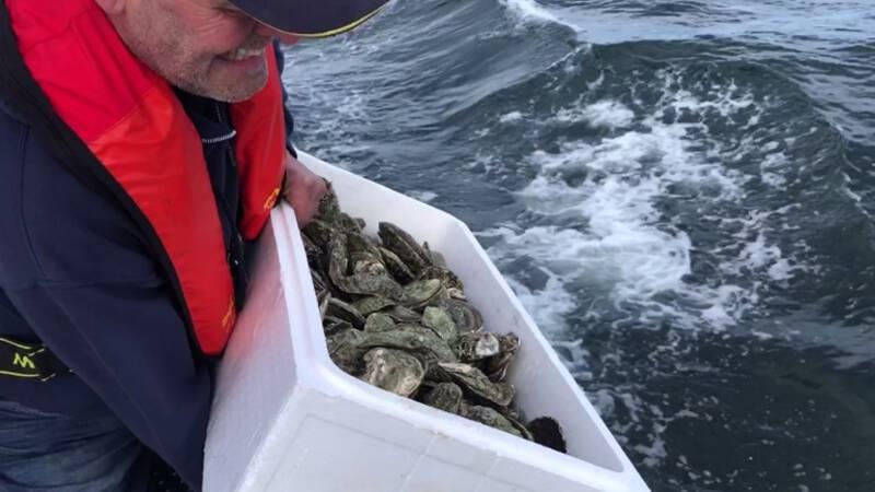 Succesje bij natuurherstel in de Noordzee: vier baby-oesters gevonden