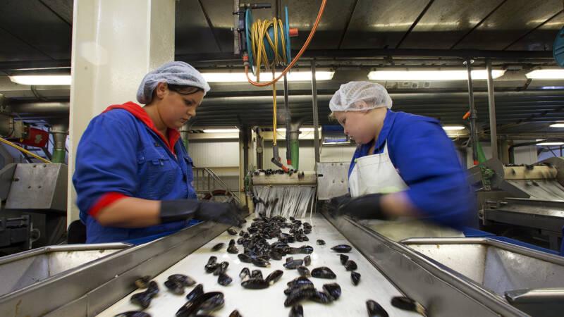 Uitzendkrachten profiteren amper van krappe arbeidsmarkt