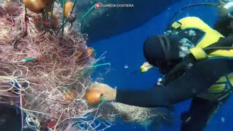 Duikers bevrijden potvis uit visnet