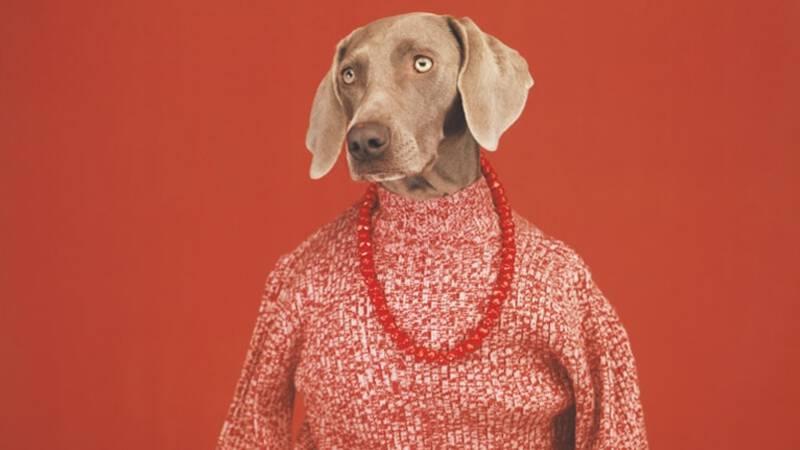 'Ik moet doen alsof de andere hond ook mag poseren, anders worden ze jaloers'