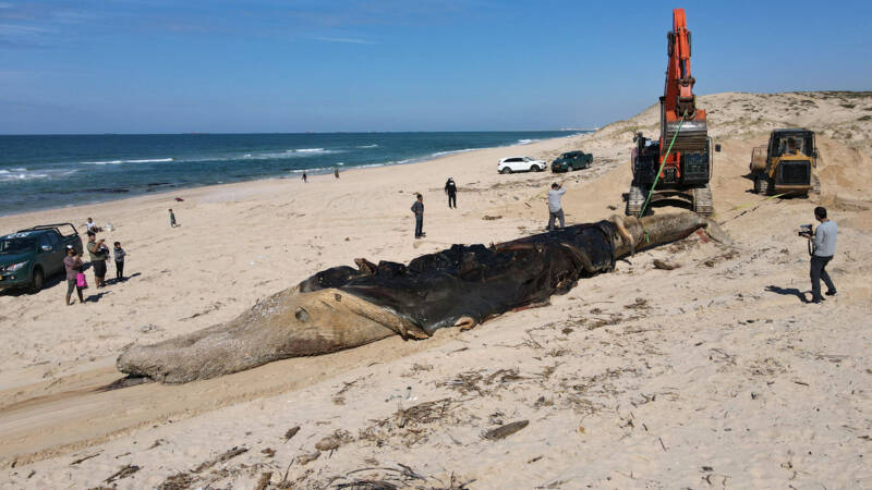 Image result for Israel closes all Mediterranean beaches due to oil spill