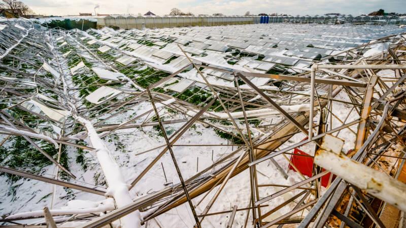 40 miljoen euro schade in glastuinbouw door sneeuw, wind was grootste probleem - NOS